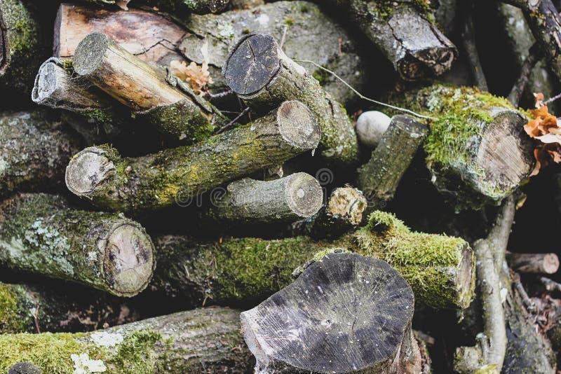 Rondins et branches gris malpropres avec de la mousse verte images libres de droits