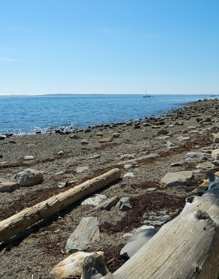 Rondins lavés sur le rivage image stock