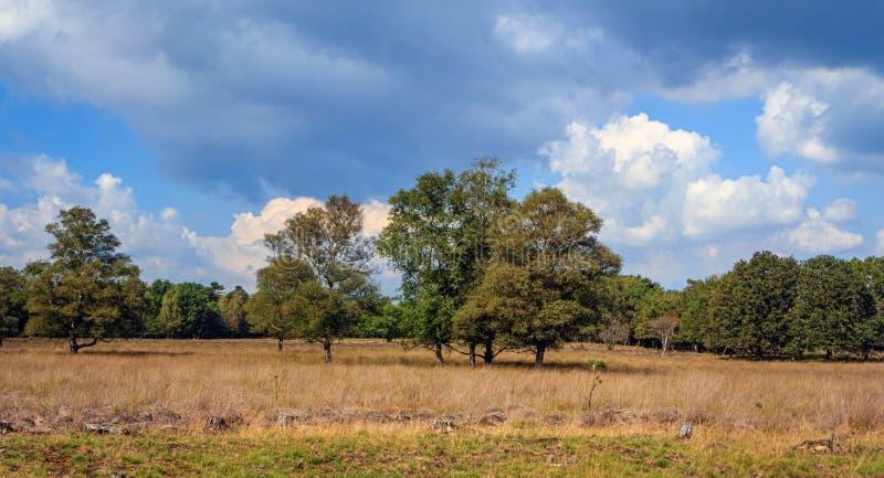 Landscape on sandy ground in Drenthe, the Netherlands. Typical autumnal landscape on poor sandy soil in Drenthe, the Netherlands stock photos