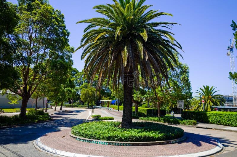 Rondo z drzewkiem palmowym, Sydney, Australia fotografia stock