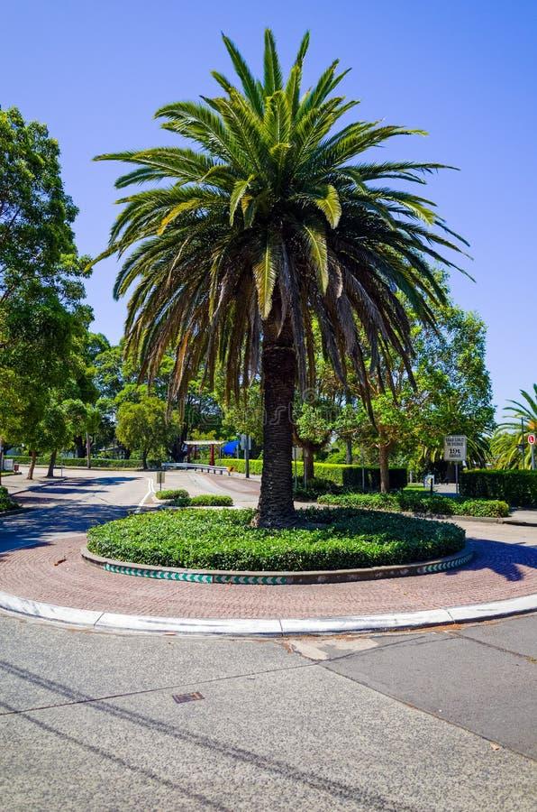 Rondo z drzewkiem palmowym, Sydney, Australia zdjęcie royalty free