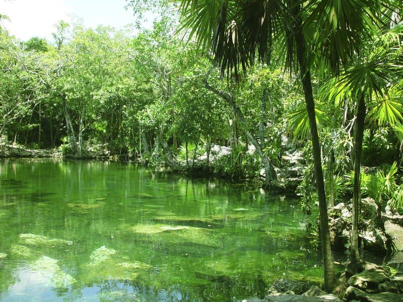 roo riviera quintana maya джунглей cenote майяское стоковое изображение