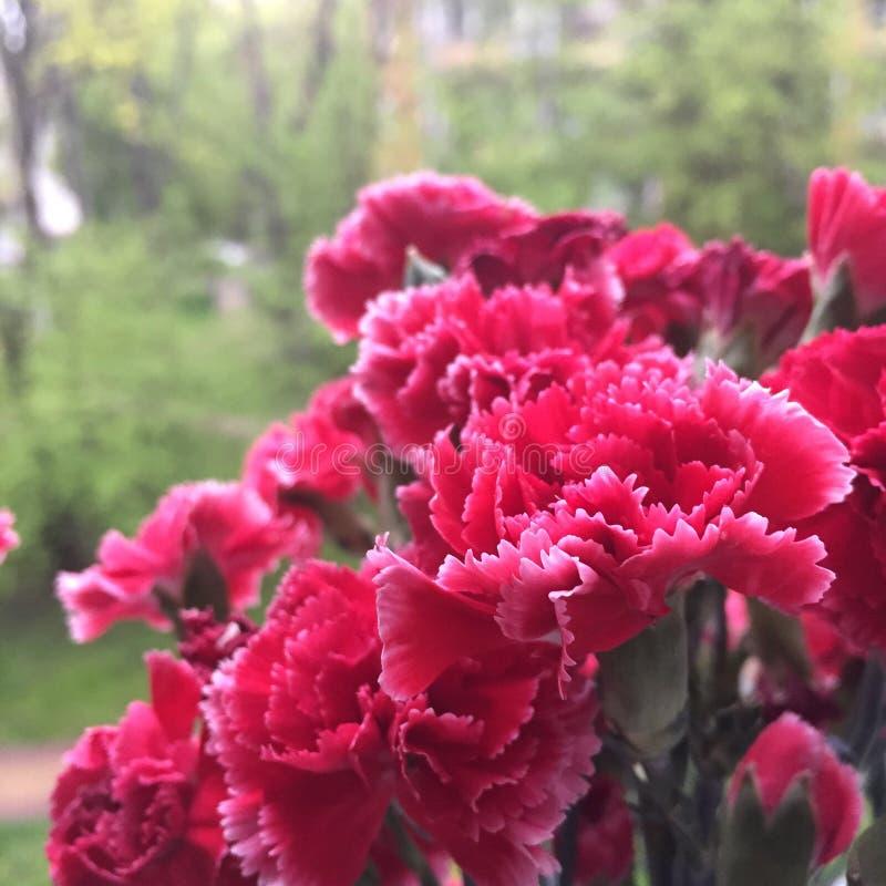 Rood anjersboeket stock foto