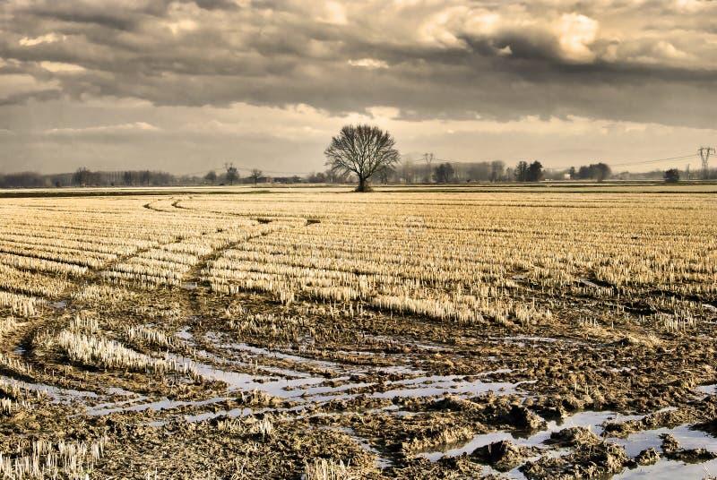 Eenzame eiken boom royalty-vrije stock afbeelding