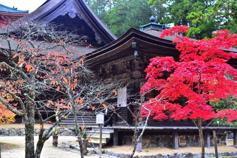 Rood Autumn Leaves bij Japanse Boeddhistische Tempel, Koyasan stock foto