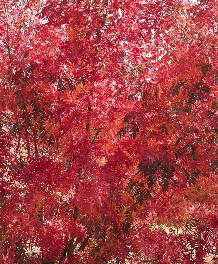 Rood Autumn Leaves Colourful Background royalty-vrije stock afbeeldingen