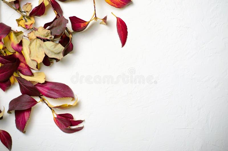 Rood Autumn Leaves op Witte Concrete Achtergrond royalty-vrije stock fotografie