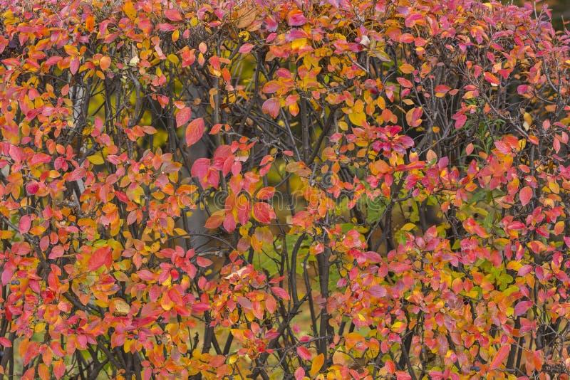 Rood Autumn Trees Leaves stock afbeeldingen