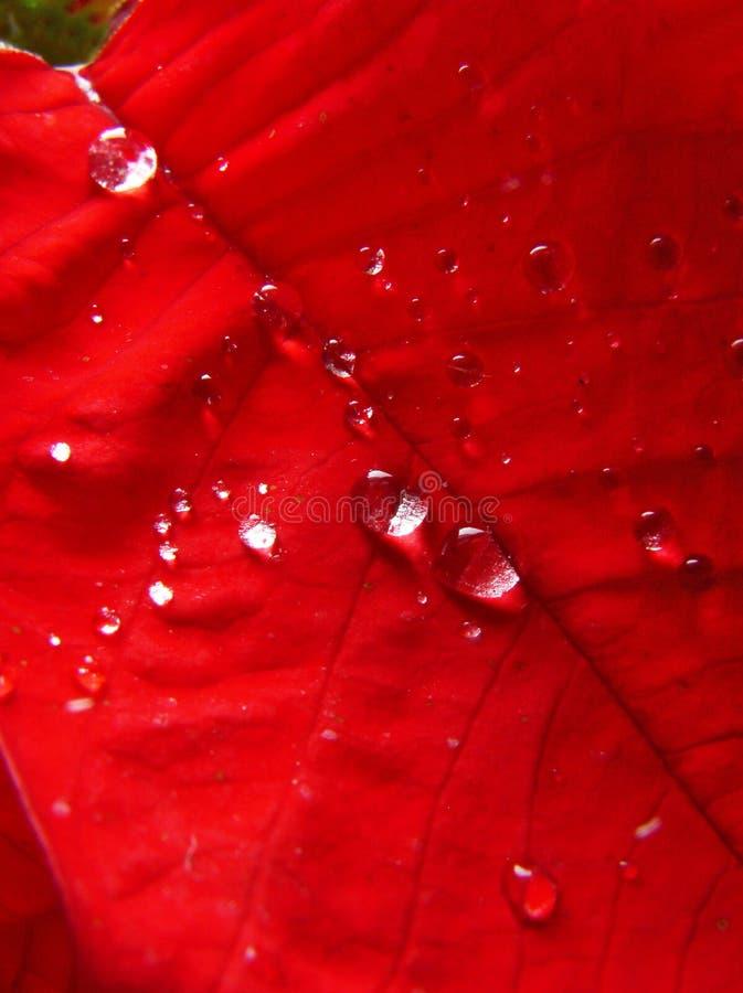 Rood blad royalty-vrije stock fotografie