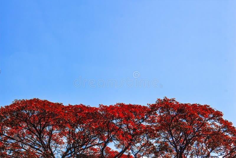 Rood de aardlandschap van de boom blauw hemel royalty-vrije stock afbeeldingen