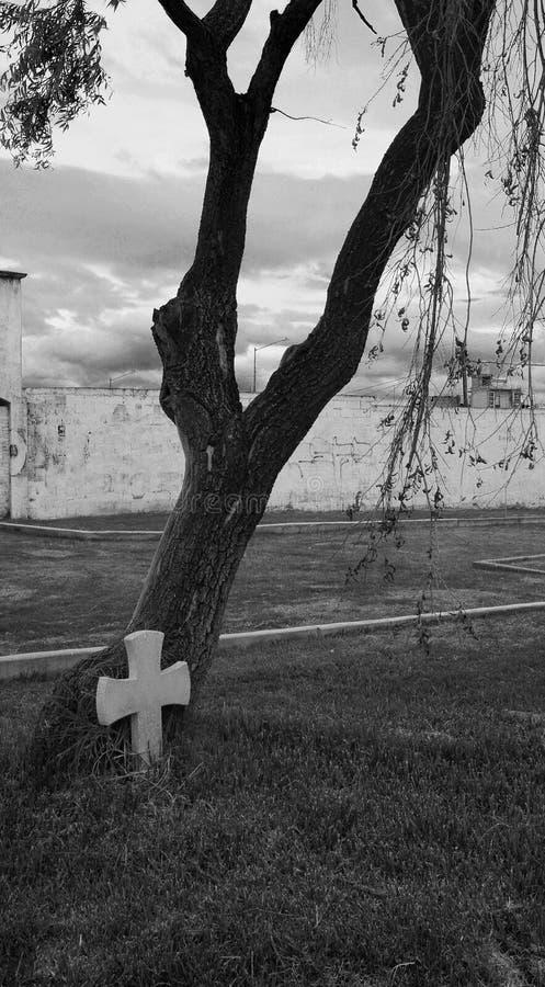 Rood de pedra preto e branco na base de uma árvore fotografia de stock royalty free