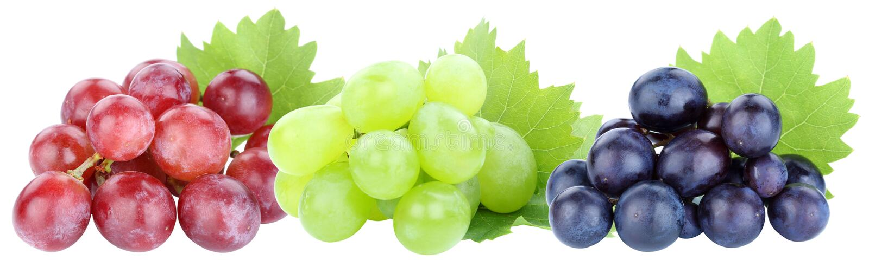 Rood die de vruchten van de druiven op een rij druif fruit op wit wordt geïsoleerd royalty-vrije stock foto