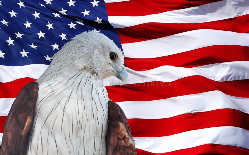 ROOD die Eagle tegen Amerikaanse Vlag wordt geplaatst.