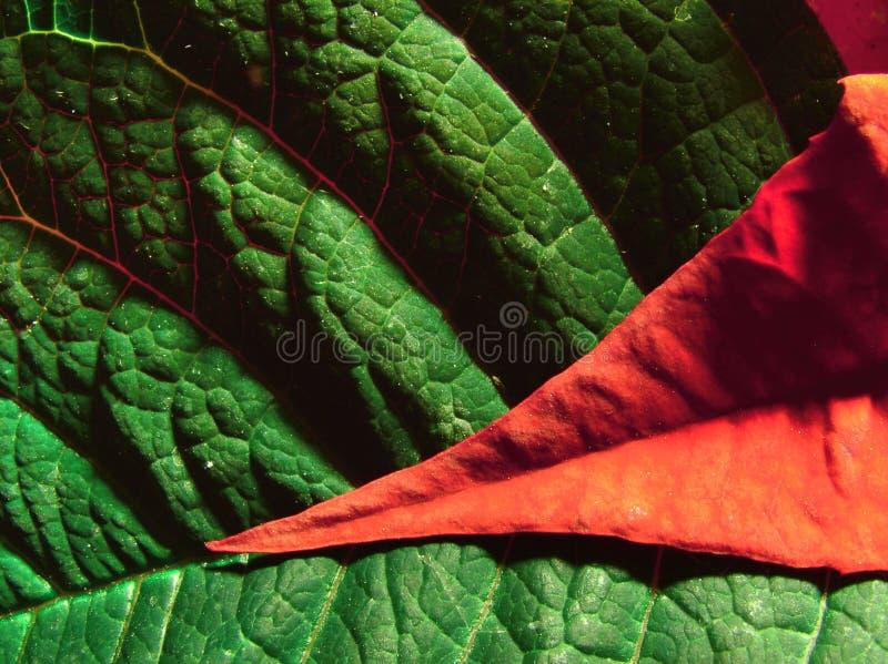 Rood en groen royalty-vrije stock afbeelding