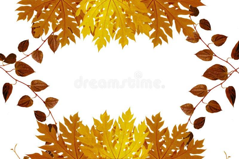 Rood en Oranje Autumn Leaves stock foto