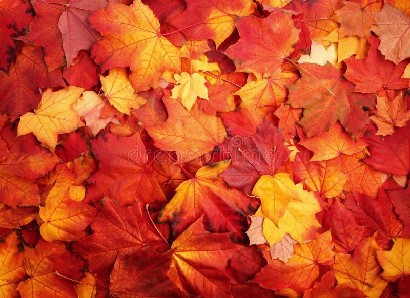 Rood en Oranje Autumn Leaves Background stock fotografie