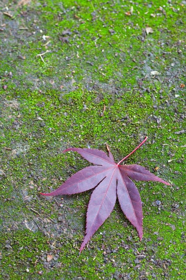 Rood esdoornblad en groen mos royalty-vrije stock afbeeldingen