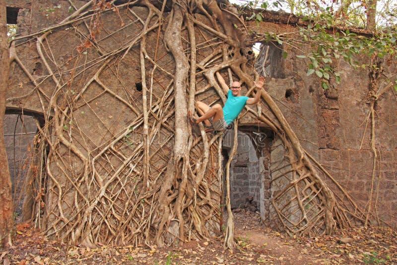 Rood Fort in India, Goa Wortels en boomstammen van oud bomen gevangen t royalty-vrije stock fotografie
