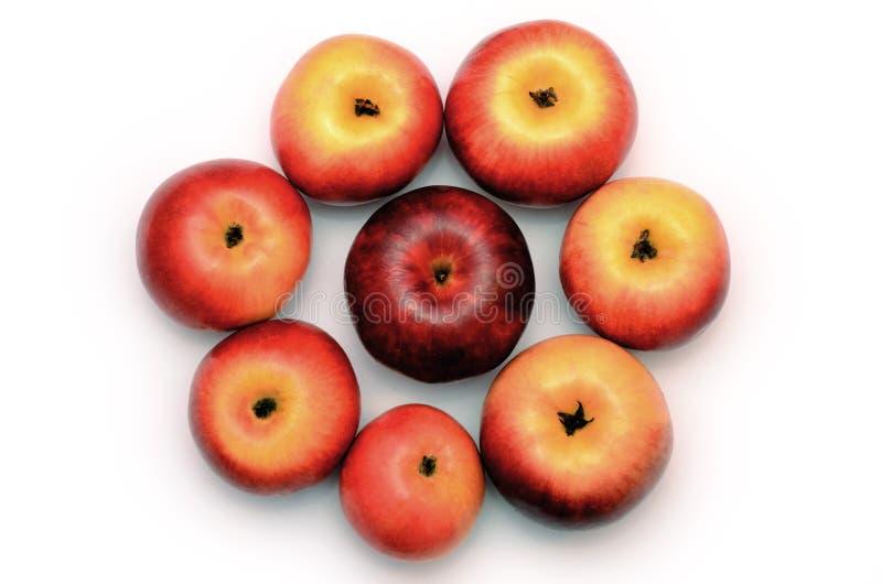 Rood-gele appelen in de vorm van een bloem stock foto