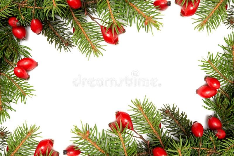 Rood-groene Kerstmisarragement royalty-vrije stock foto's
