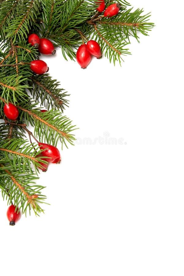 Rood-groene Kerstmisarragement stock foto