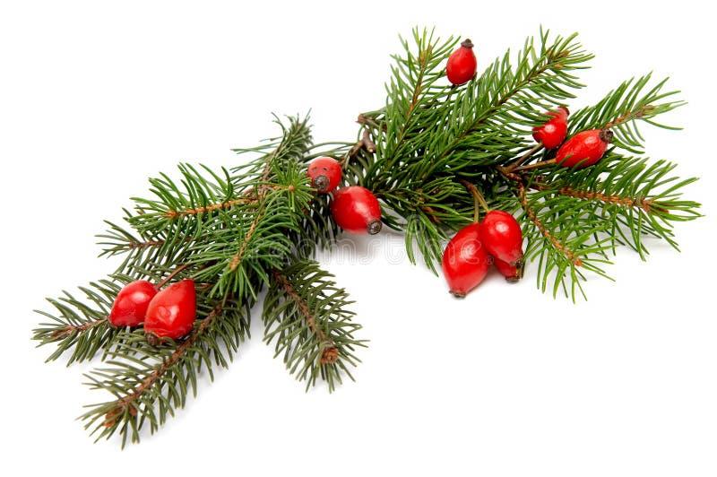 Rood-groene Kerstmisarragement royalty-vrije stock fotografie