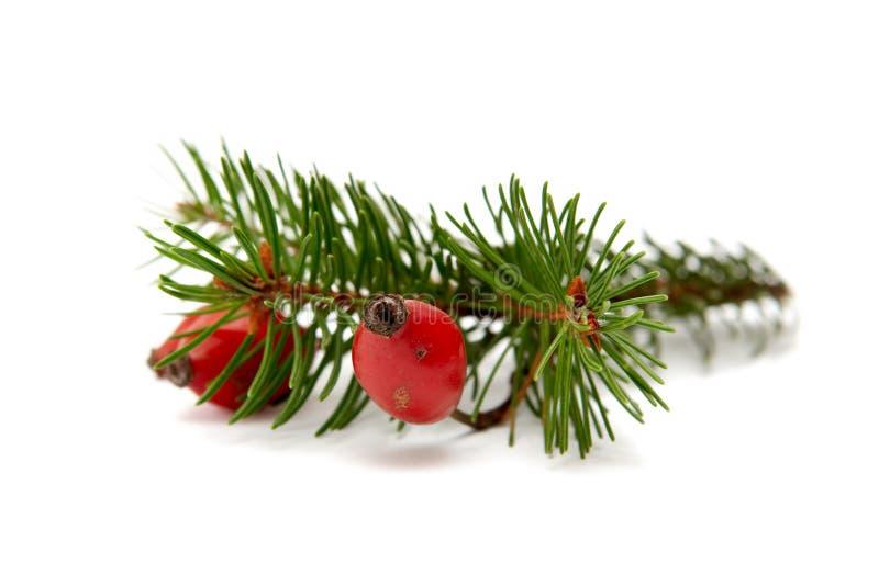 Rood-groene Kerstmisarragement royalty-vrije stock afbeeldingen