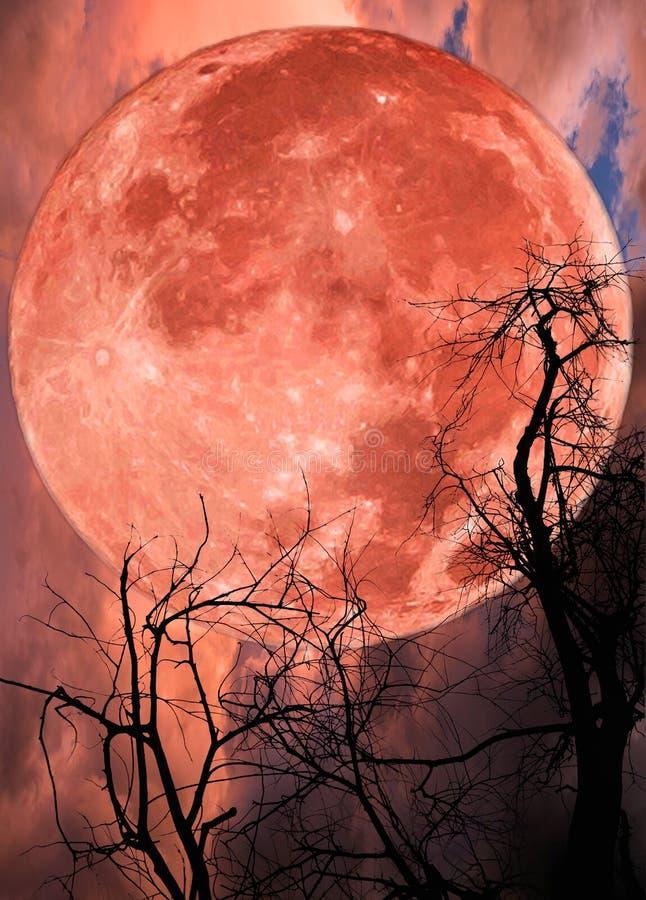 Rood groot maan en boomsilhouet stock fotografie