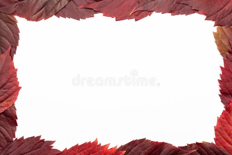 Rood, het liggen bladeren op een witte achtergrond met een het knippen weg worden geïsoleerd die Autumn Colors royalty-vrije stock foto