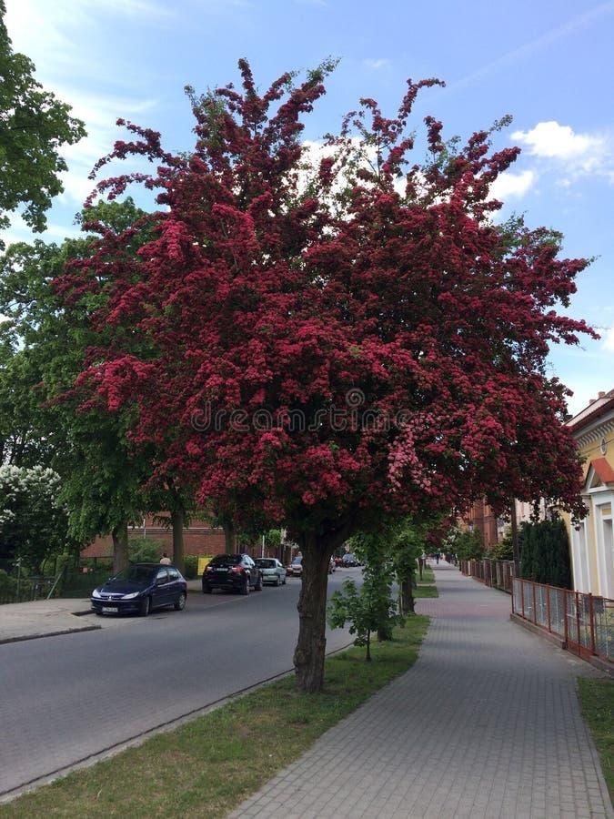 Download Rood Hout In De Straten Polen Redactionele Afbeelding - Afbeelding bestaande uit nave, licht: 107700810