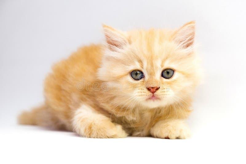 Rood katje stock afbeelding