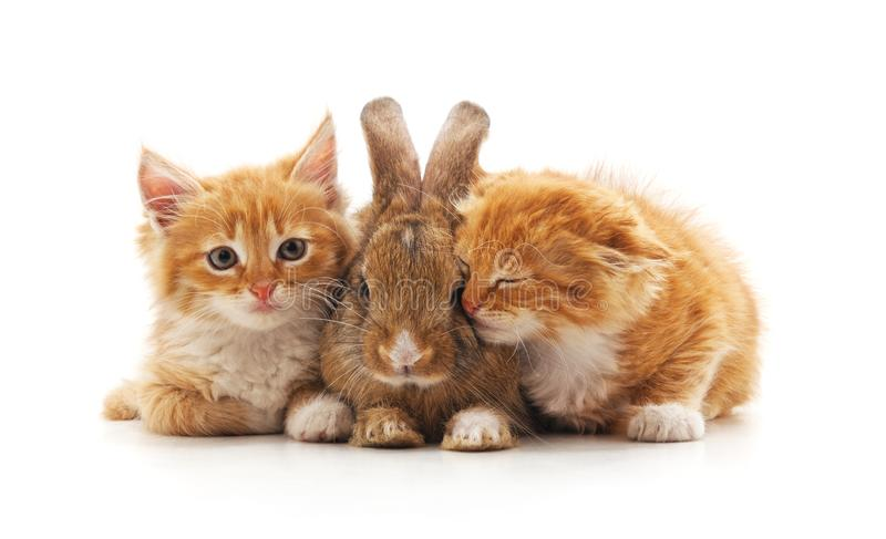 Rood katjes en konijntje royalty-vrije stock foto's