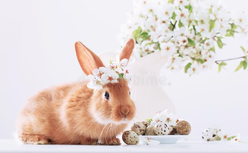 Rood konijn met paaseieren stock afbeeldingen
