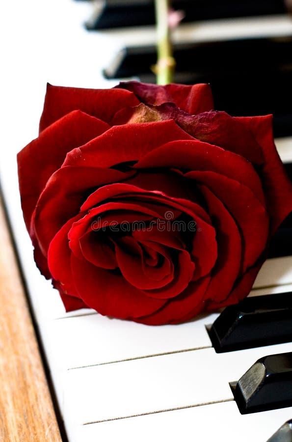 Rood nam binnen op de piano toe royalty-vrije stock foto's