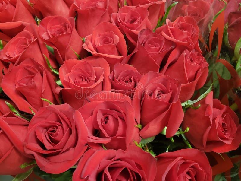 rood nam bloem in een bloemenboeket voor gift van liefde, achtergrond en textuur toe stock afbeeldingen