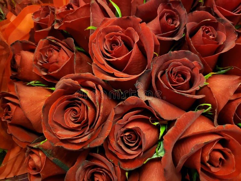 rood nam bloem in een bloemenboeket voor gift van liefde, achtergrond en textuur toe stock afbeelding