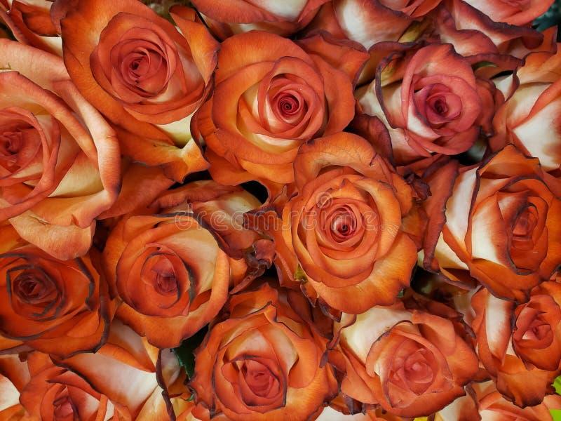 rood nam bloem met wit in een bloemenboeket voor gift van liefde, achtergrond en textuur toe stock foto's