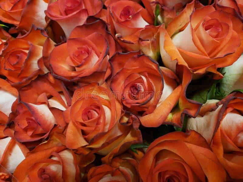 rood nam bloem met wit in een bloemenboeket voor gift van liefde, achtergrond en textuur toe royalty-vrije stock afbeeldingen