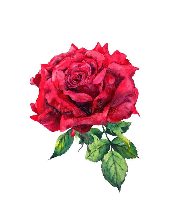 Rood nam bloem toe Geïsoleerde Waterverfillustratie royalty-vrije illustratie