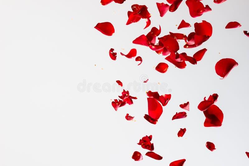 Rood nam bloemblaadjes toe stock foto