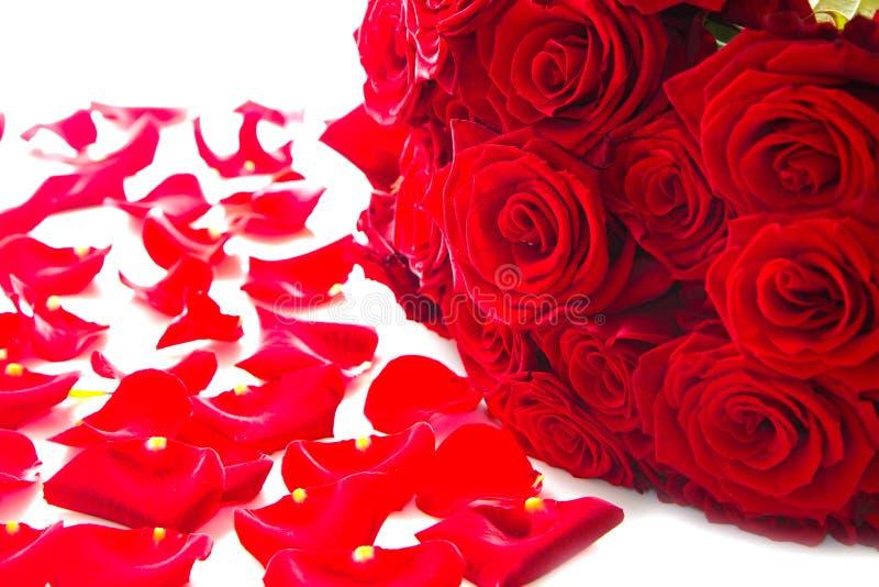 rood nam bloemblaadjes toe stock fotografie