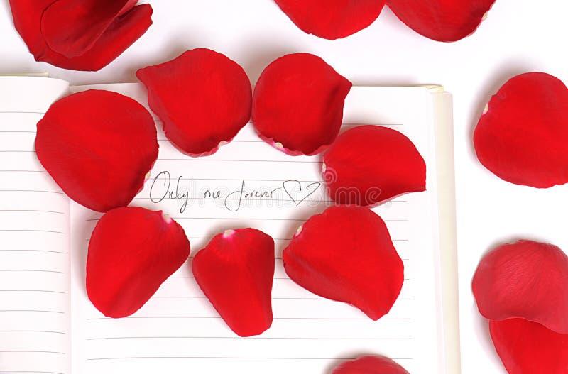 Rood nam Bloemblaadjes van Liefde toe royalty-vrije stock afbeelding