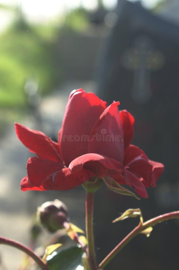 Rood nam en grafsteen toe royalty-vrije stock foto's