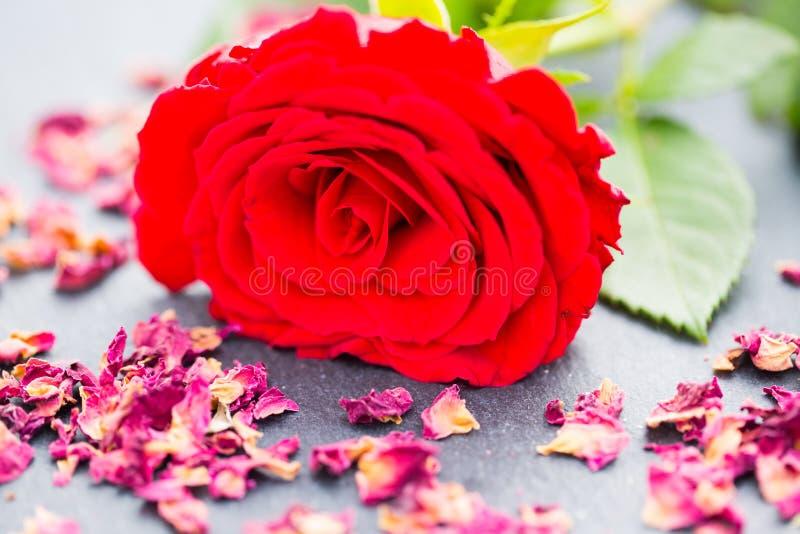 Rood nam met roze bloemblaadjes op leiraad toe stock afbeeldingen