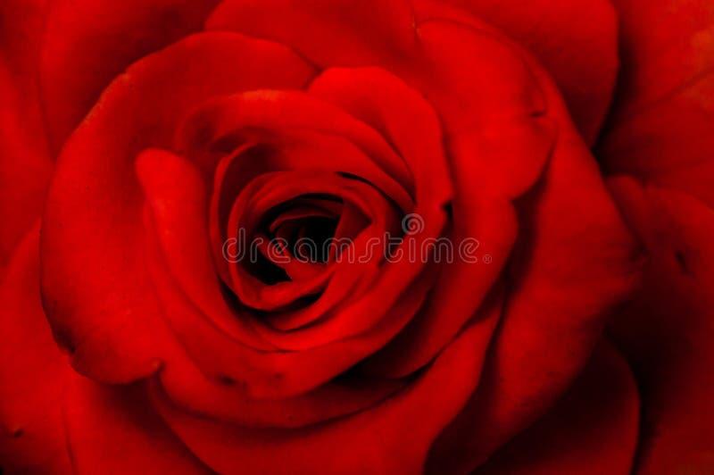 Rood nam met zwarte achtergrond toe stock foto's
