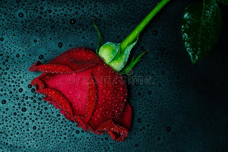 Rood nam op donkere achtergrond toe royalty-vrije stock fotografie
