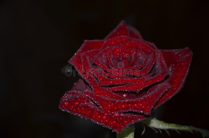 Rood nam op een zwarte achtergrond toe royalty-vrije stock afbeelding
