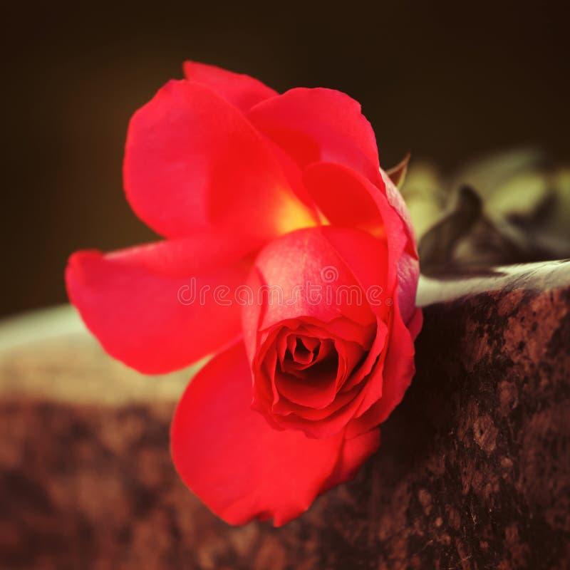 Rood nam op granietgrafsteen toe royalty-vrije stock foto