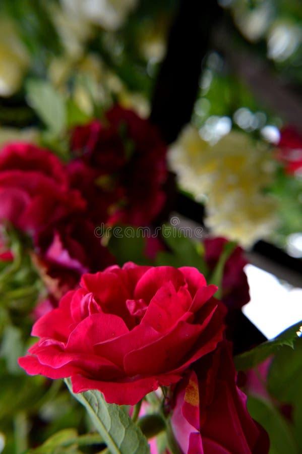 Rood nam op groene achtergrond met bloemenlichten toe royalty-vrije stock foto