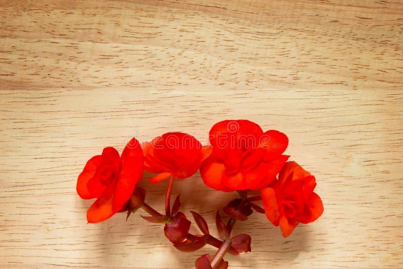 Rood nam op houten achtergrond toe Beeld van Valentijnskaartendag stock foto's